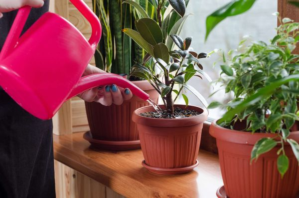 Top 5 tips for plant care through the winter