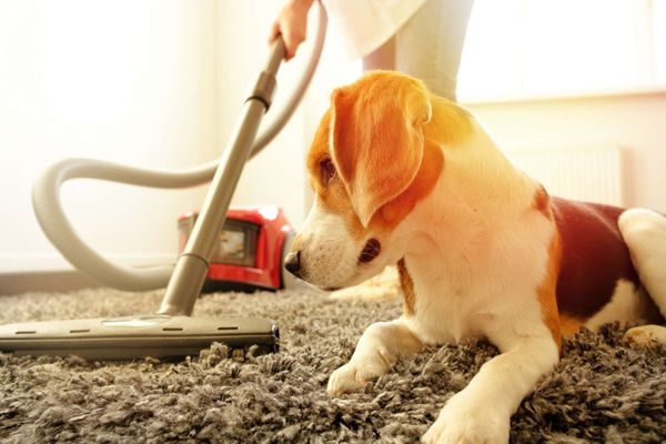 Cleaning with animals: How to work your way around the smallest members of the family